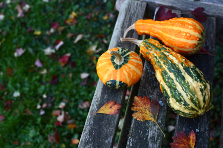 Three ornamental gourds among fall leaves on a wooden garden bench, with copy space