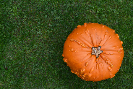 Warty-skinned orange pumpkin on green grass, with copy space Stock Photo