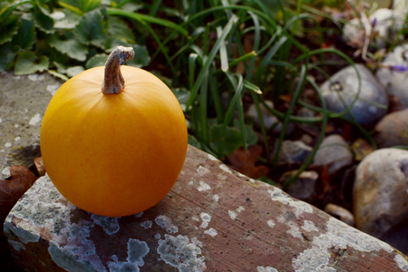 Small orange gourd on the weathered brick wall of a rockery Stock Photo