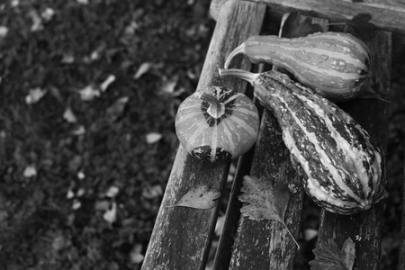 Three ornamental gourds among fall leaves on a wooden garden bench, with copy space - monochrome processing