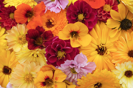 Floral background of garden flowers in shades of yellow and red - calendulas, dahlias, rudbeckia, cosmos and nasturtiums