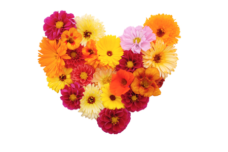 Mixed flowers in a heart shape - dahlias, cosmos, nasturtiums and calendulas on white background