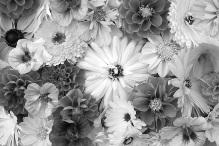 Large calendula flower among mixed blooms - nasturtiums, dahlias and cosmos - monochrome processing