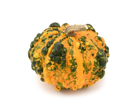 Unusual warted ornamental gourd with orange skin and dark green markings, on a white background