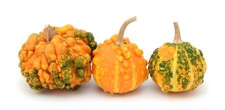 Unusual warted decorative gourds with multi-coloured green and orange skins, on a white background