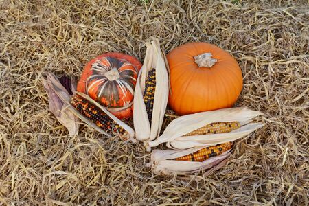 Ornamental corn cobs with fall gourds - Turks Turban and orange pumpkin on hay