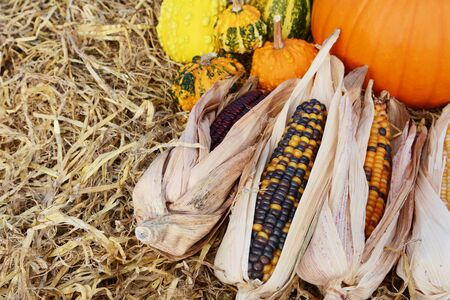 Indian corn cobs in selective focus with fall ornamental gourds and a pumpkin on straw with copy space