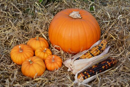 Five mini pumpkins and two ornamental corn cobs with a ripe orange pumpkin on a bed of straw 写真素材