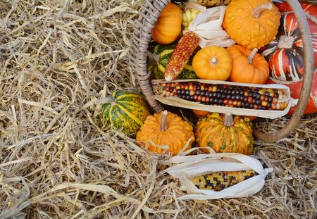 Woven basket full of Thanksgiving ornamental gourds and squash, with flint corn overflowing onto pile of hay