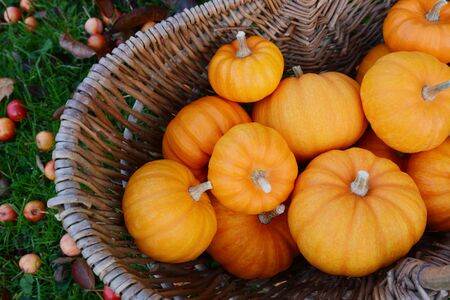 Woven basket full of Jack Be Little mini pumpkins ready for Thanksgiving decorations in fall
