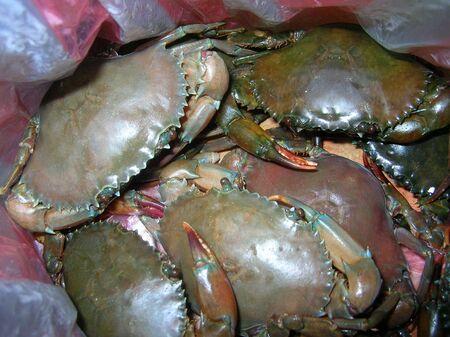 Blue Crabs Reklamní fotografie