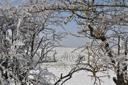 furrow: Field and hedge with heavy haw frost