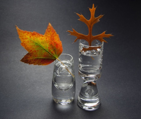 Still Life With Two Autumn Leaves In Small Crystal Vases On Gray