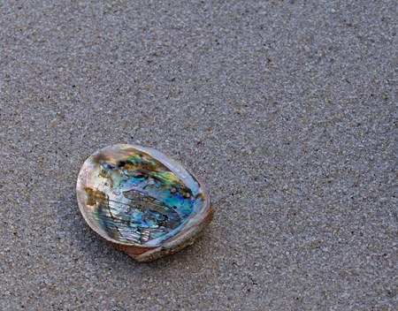 Closeup of abalone shell on wet sand Stock Photo