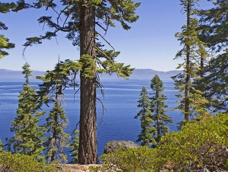 lake tahoe: Summer landscape with blue Lake Tahoe and trees