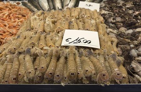 Mantis shrimps at Pescheria (Rialto Fish Market) in Venice, Italy Imagens