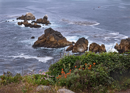 Spring landscape with ocean,rocks and spring wild flowers.