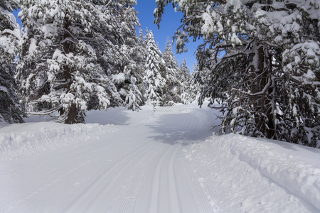 Winter landscape with ski trail in snowy forest. Imagens