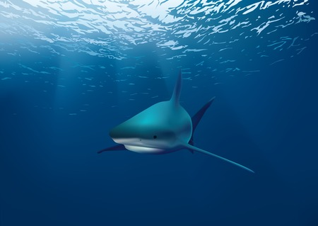 Shark underwater Vector