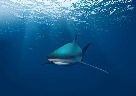 Shark underwater Vektoros illusztráció