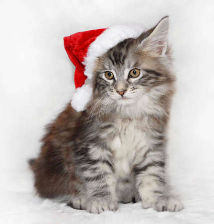 Kitten in Santa Hat photo