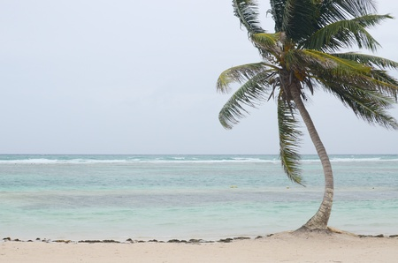 sways: A lone palm tree sways in the winds on the coast of southeastern Mexico