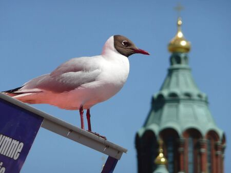 seagull against blue sky with cathedral spire in the background.