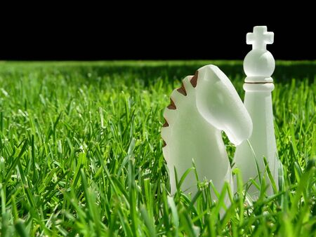 White glass knight and king chess pieces in green grass in selective focus. Stock Photo