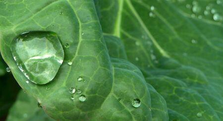 la conservación del agua - única gota de agua sobre la hoja verde brillante  Foto de archivo - 3629397