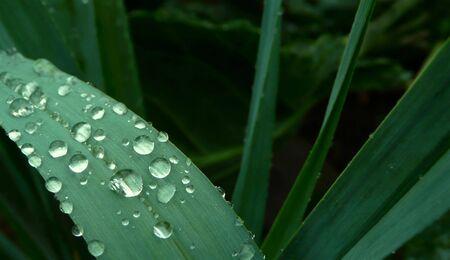 water dew droplets grass blades