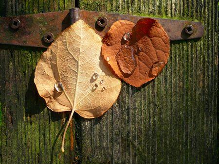 autumn leaves on old wooden door hinge wallpaper background Stock Photo - 3629399