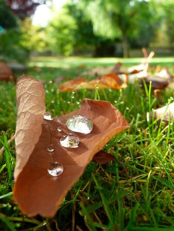 Fallen autumn leaves and dew water drops in grass