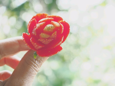 A beautiful flower made from strawberry. Stock Photo