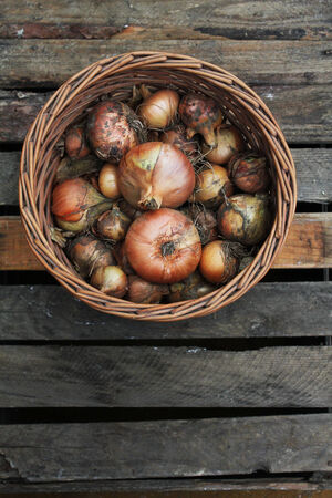 onion from the harvest in a basket photo