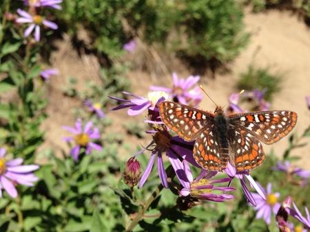Butterfly on wild flower at mt. Rainier national park Stock Photo