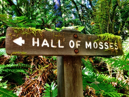 Hoh rainforest Olympic national forest Washington