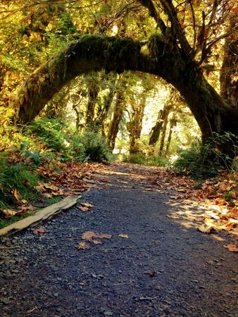 Hoh rainforest Washington state