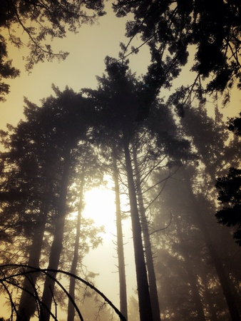 Foggy forest in Washington state Stock Photo