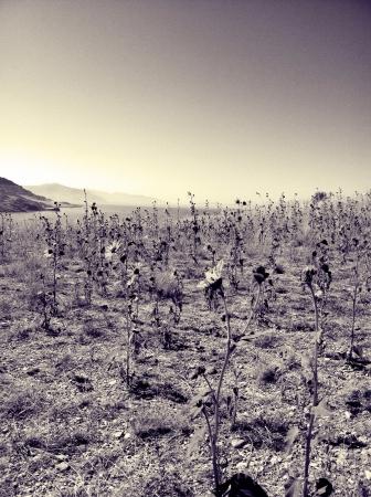 Antelope Insel Salt Lake Utah Standard-Bild - 22503889
