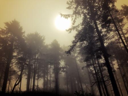 Shadowy trees in Washington