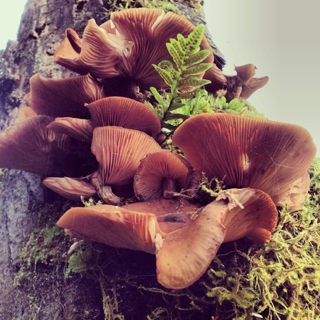 Mushrooms growing on a tree in Washington