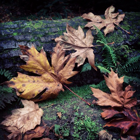 Fallen leaves resting against a moss covered tree trunk