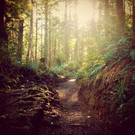Trail in a rainforest in Washington  Stock Photo