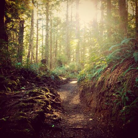 Trail in a rainforest in Washington  Stock Photo
