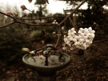 New flowers in a winter garden