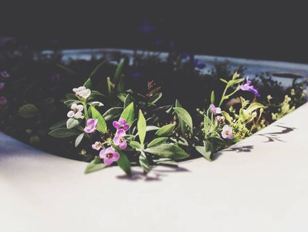 Tiny flowers growing in the spring Stock Photo