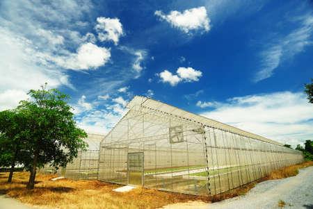 Plant kwekerij van biologische groenten Stockfoto