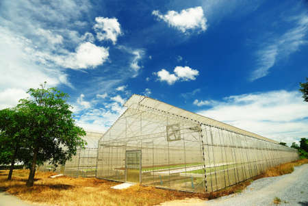 the greenhouse: Plant nursery of organic vegetable Stock Photo