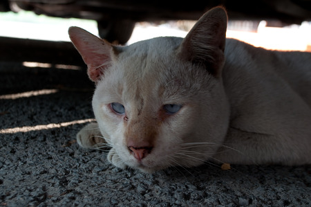 abstracted: Lonely and sad abandoned old dirty white cat hiding under a vehicle shadow, abstracted looking away with pale blue eyes. Homeless street animal.