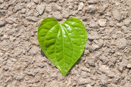leaf shape: Green heart shape leaf on rocky asphalt floor Stock Photo